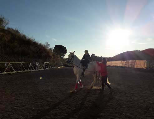 EquitaciónWEB5